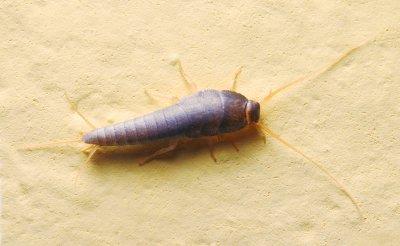 bug - home